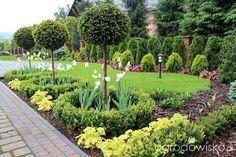 tulipanowiec ogrodowisko - Szukaj w Google