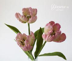 Tulipán Loro - Tulipanes papagayo