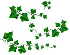 Branch Drawing, Vine Drawing, Leaf Drawing, Flower Branch, Flower Art, Vine Leaves, Plant Leaves, Clipart, Ivy Tattoo