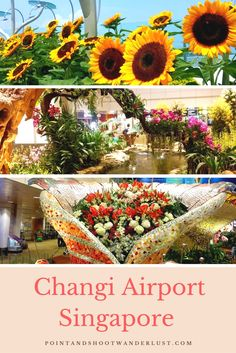 Changi Airport | Singapore | Things to do and see in Changi Airport