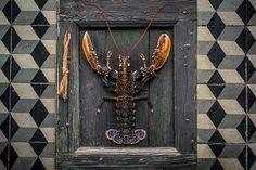 CHERRYSTONE_Photographie_culinaire_homard.jpg (1000×667)
