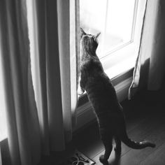 curious by corinne boutin, via Flickr