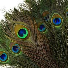 KAYSO Real Natural Peacock Feathers, 100 Pack