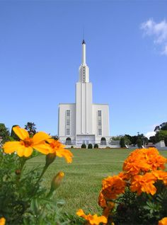 The Lds Hamilton New Zealand Temple Mormon Temples, Lds Temples, Las Vegas Temple, Hamilton New Zealand, Lds Temple Pictures, Later Day Saints, Cool Pictures, Beautiful Pictures, Lds Church