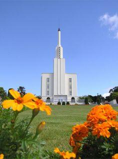 The Lds Hamilton New Zealand Temple Mormon Temples, Lds Temples, Las Vegas Temple, Hamilton New Zealand, Beautiful Buildings, Beautiful Places, Lds Temple Pictures, Later Day Saints, Lds Church