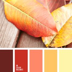 Color Palette №2606 | IN COLOR BALANCE