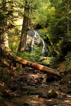 Forest Waterfall, The Redwoods, California   See More Pictures   #SeeMorePictures