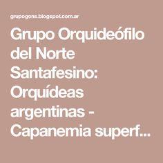 Grupo Orquideófilo del Norte Santafesino: Orquídeas argentinas - Capanemia superflua