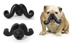 Pup + toy + moustache = amazing