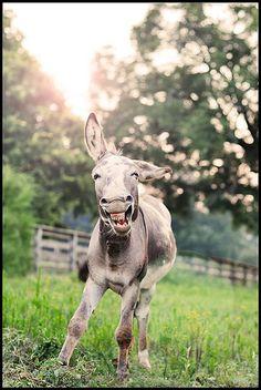 Happy donkey