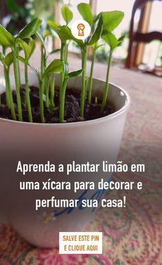 Cactus Plants, Garden Plants, Zen, Lets Do It, Clever Diy, Plant Decor, Bonsai, Outdoor Living, Flora