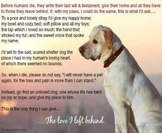 27 Best Merlin Our Old Man Images Rainbow Bridge Pet Loss Grief Dog Quotes