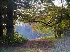 A magnificent autumn in the north Cotswolds with brilliant leaf colour after a warm , dry summer ideal of country walking. Leaf Coloring, Country Roads, Plants, Summer, Summer Time, Flora, Plant, Planting, Verano