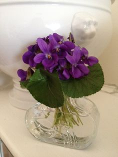 Violets from my Garden