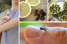 ¡Rocíe esta mezcla simple y usted nunca verá hormigas en su hogar otra vez! Mosquitos, Garlic, Cactus, Vegetables, Food, Closet Solutions, Natural Health, Simple, Recipes