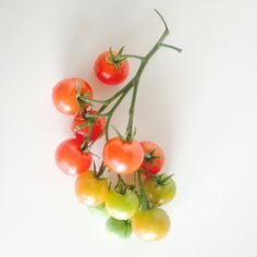 Kerstomaatjes | Cherry tomatoes