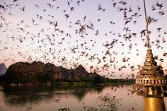 Have you ever seen so many bats?  They live in the caves which surround Hpa-an, Myanmar, and come out at sunset.  An incredible site.