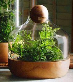 Vida-EcoVerde : Como hacer un jardin en una botella
