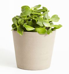 Can't seem to keep your houseplants alive? Try one of these 5 five superstars — they can withstand almost anything. For more gardening tips and tricks, visit P&G everyday today!