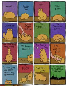 Common Cat positions