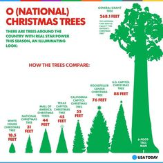tallest conifer - Google Search