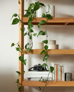 Our Tilt Shelving is right at home with a thoughtfully curated collection of books, art pieces and a lush climbing plant. Tilt, Climbing, Lush, Shelving, Art Pieces, Sunday, Spring, Plants, Summer