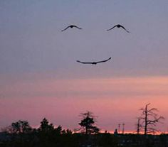 Three birds... One smiley face..... Great photo all the same......