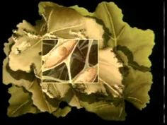 Ciencia Divertida Clasificación de los Seres Vivos.mpg Seres vivos unicelulares