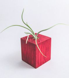 Air Plant Wood Planter Combo: Red Rustic Distressed di VinoCharm