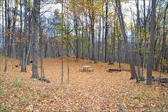 Murphys Point Provincial Park, Ontario, Canada Ontario Parks, Canada, Plants, Plant, Planets