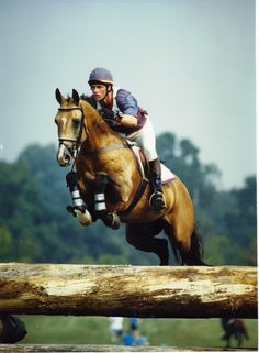 #Akhal-Teke stallion Sengar #eventing