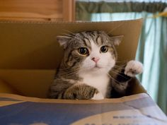 Maru in another box