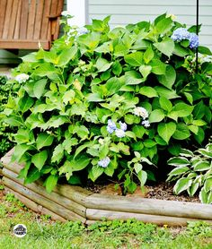 Looking for a way to grow your garden without a lot of money? Learn how to start hydrangeas from cuttings, Propagating your plants will save you money. Garden Yard Ideas, Love Garden, Dream Garden, Lawn And Garden, Garden Projects, Backyard Ideas, Backyard Patio, Outdoor Ideas, Outdoor Decor