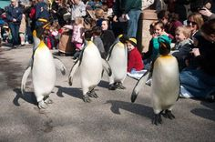 Ward off the winter blues at Delta Dental Winter Zoo! Sundays through February Voigt St Louis Zoo, Penguin Parade, Fun Places To Go, The St, Penguins, Blues, February 10, Events, Sadie