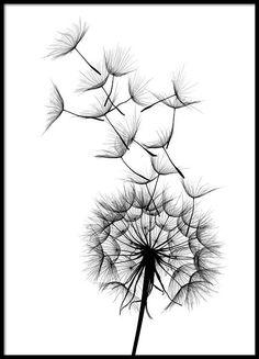 Dandelion no2 Poster in der Gruppe Poster / Größen und Formate / 50x70cm bei Desenio AB (2393)