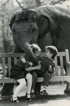 baby elephant wants ice cream