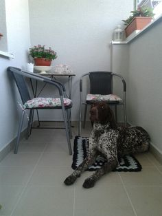 GSP Atrei German Shorthaired Pointer, This Is Us, Table, Furniture, Home Decor, Decoration Home, Room Decor, Tables, Home Furnishings