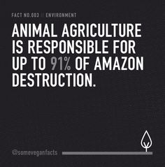 #vegan #dairy #veganism #animalcruelty #plantbased #veganfacts #someveganfacts #vegetarian #dairyfree #cowspiracy #crueltyfree