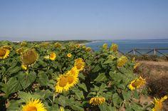 #Abruzzo #puntaderci #sun #sea #beach #nature #beatiful #Vasto #chieti #summer #adriatic #italia #puntapenna #fashion #vivoabruzzo #amazing #relax #sole #mycity #pamoramicview #wonderful #mareadriatico #paradise #moments #travel #life #lamiacittà #riservanaturale #girasoli #campodigirasoli #summer #picture #summer2015 #mothernature #romantic #naturereserve #immobiliarecaserio #exclusiveproperty…