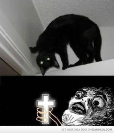 Mother Of God by - A Member of the Internet's Largest Humor Community Haha Funny, Funny Cute, Funny Memes, Hilarious Stuff, Funny Pick, Cat Memes, Hate Cats, I Love Cats, Crazy Cat Lady