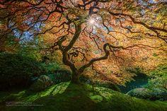 Portland Japanese Garden | Flickr - Photo Sharing!  by Gavin Hardcastle - Fototripper