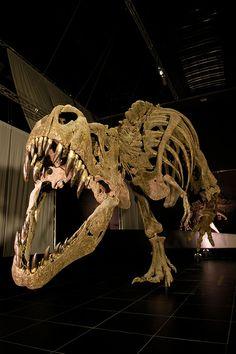 Dinopolis , Teruel Spain