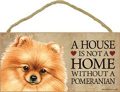 A House is Not a Home Without a Pomeranian
