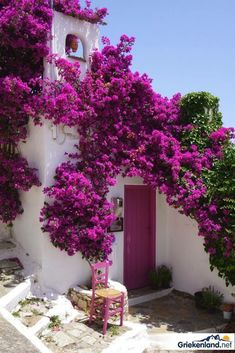 Beauty and the Harpsichord — Bougainvillea Beautiful Gardens, Beautiful Flowers, Beautiful Places, White Flowers, Colorful Garden, Backyard Landscaping, Landscaping Ideas, Patio Ideas, Scenery