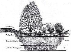 What Are Rain Gardens, and Why Should We Use Them?