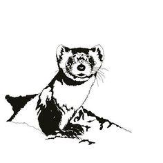 Black Footed Ferret. Letter F. #ferret #dailyart #daily #animals #animalkingdom #art #artcommissions #challenge #wildlife #wildlifeart #newart #nature #natureart #artchallenge #artist #art🎨 #artstagram #sammyjackles