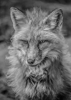 Striking A Pose Black And White by Teresa Wilson