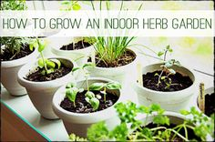 want to do this ASAP once we are moved in! indoor herb garden.