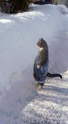 """Cat examining snow in dungarees  """"Mighty fine snowbank there, Martha. Mighty fine."""""""