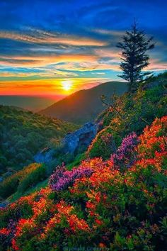 Beautiful Nature Pictures, Beautiful Nature Wallpaper, Beautiful Sunset, Amazing Nature, Nature Photos, Pretty Pictures, Beautiful Landscapes, Beautiful World, Images Of Nature